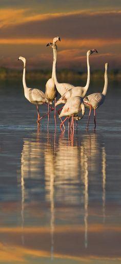 Flamingo Dance Digital Art by Basie Van Zyl - Flamingo Dance Fine Art Prints and Posters for Sale