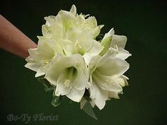 Wedding Flowers - Bride's Bouquet of all white Amyrillis blooms.