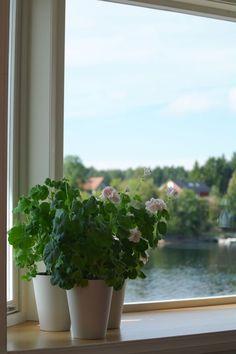 Mårbacka pelargoner Herbs, Flowers, Plants, Home, House, Florals, Herb, Plant, Homes