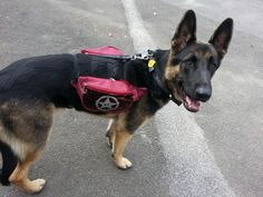 DIY Dog Backpack,  for my dog so that when your out he/she could take his own water and treats :) All you need is two matching bum bags and some spare straps and buckles. You join the bags together using sections of strap and then have an adjustable strap going around their belly and one around their front. I also attached it too his collar to stop it from slipping around. Easy!