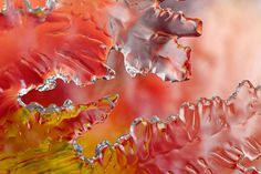 Ice Macro Photography Ice sheet by Brian Valentine. Source: Telegraph