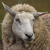 Adam and Eve Lord Is My Shepherd, The Good Shepherd, Sheep Face, Metal Siding, Stained Concrete, Adam And Eve, Day Of My Life, Lamb, Goats