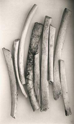 Irving Penn, Bird Bones, Sweden, 1980