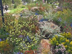 Australian native garden (landscaping a hill drought tolerant) Bush Garden, Meadow Garden, Dry Garden, Garden Cottage, Garden Gate, Cottage Chic, Back Gardens, Small Gardens, Outdoor Gardens