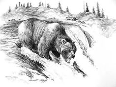 Pencil Drawings of Bears | image not available photos not available for this variation