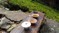 Black Phoenix Tea | Taiwan | teacrowns.com