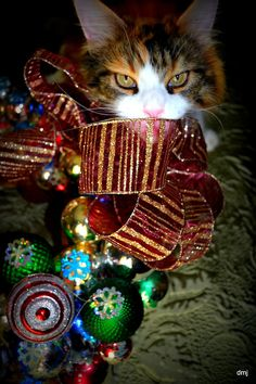 How to Cat Proof Your Christmas Tree. Is your cat smitten by your Christmas tree – so intrigued that she clambers onto it, knocking needles, decorations, and tinsel everywhere? I Love Cats, Crazy Cats, Cute Cats, Funny Cats, Christmas Kitten, Christmas Animals, Merry Christmas, Christmas Decor, Christmas Ornaments