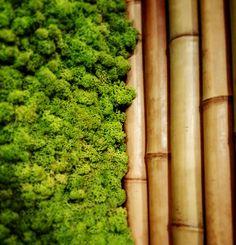 Moss bamboo green design nature