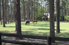Horse farms in the equestrian country near #SouthernPines #NC. #equestrian. Contact Lin for your dream home in the Sandhills: http://linhutaff.com/