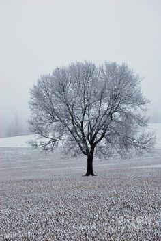 ✯ Snowcover