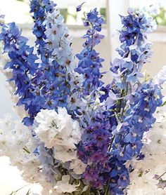 Delphinium, Fordhook Cottage Garden Mix  Elegant selection with strong stems and vivid flowers.  Burpee Exclusive  Our own blend of white, sky and deep purple-blue delphiniums. Tall, sturdy, floriferous plants topped with sturdy spikes make music in the cottage garden. We find this selection especially elegant, the plants staying upright and stems dependably strong. Extra-floriferous, these are favorites for cottage gardens and fresh bouquets.