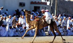 Dhow racing, horse racing, camel racing, bull fighting and falconry are Oman's prided and significant traditional sports. Each one represents a rich heritage and nar