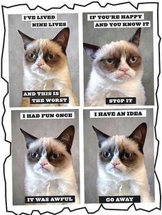 "Cheer up, Grumpy cat, you're a million dollar megastar: She's got her own agents, bodyguards and lawyer. How one very sour puss is building a money-spinning global showbiz empire - lelz Grumpy Cat! ""I have an Idea, GO AWAY! Grumpy Cat Quotes, Funny Grumpy Cat Memes, Funny Animal Jokes, Funny Animal Pictures, Animal Memes, Funny Animals, Cute Animals, Grumpy Kitty, Funny Kitties"
