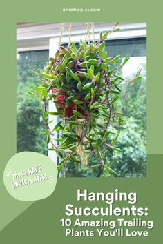 Hanging Succulents: 10 Amazing Trailing Plants You Need Now! - Succulents are all the rage right now, and I want to share some photos and care tips on 10 amazing hanging succulents and cactus plants. I have owned and grown all of these trailing beauties at different points in my life and am happy to share my own tips! Best Indoor Plants, Cool Plants, Cactus Plants, Succulent Cuttings, Succulent Soil, Lower Lights, Hanging Succulents, Variegated Plants, House Plant Care
