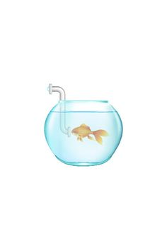 20 Types of Goldfish for Aquarium (Oranda, Shubunkin, Bubble Eye, Etc) Fish Vector, Vector Art, Goldfish Types, Golden Fish, Free Vector Files, Wishes For You, Popular Pins, Ultra Violet, Two By Two