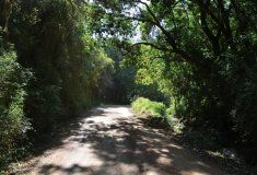 The Knysna Forest Knysna, Destinations, Country Roads, Travel Destinations
