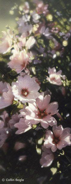 Collin Bogle | ... às 01 13 marcadores collin bogle flores fotografias imagens natureza