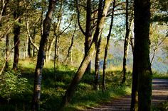 https://flic.kr/p/McR5SX | Follow me | The forest path leading away from Mt…
