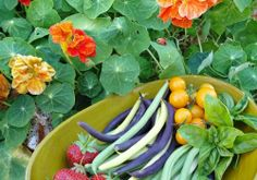 Edible landscaping with flowers and vegetables