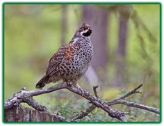 Image result for pyy Grouse, Image, Sewing, Dressmaking, Couture, Stitching, Sew, Costura, Needlework