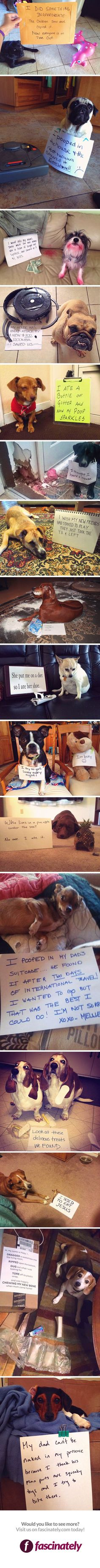 Meet the Naughtiest Dogs of 2014 I laughed so hard!