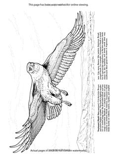 Birds of Prey Coloring Book Dover Nature Coloring Book Amazon