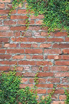 Red Ivy Brick Backdrop BACKDROP OUTLET