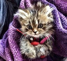 KITTEN TRAPPED IN THE WALS OF AN ABANDONED HOSPITAL
