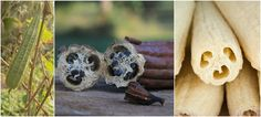 How To Grow Luffa For An Endless Supply Of Sponges