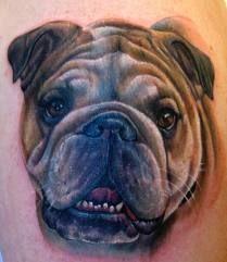 bulldog tattoo -