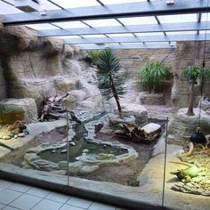 Iguanas fall ill to this disease should they have endured from malnutrition. If your iguana becomes too near the tank's heat supply, it may get burned. Throughout the last few decades, iguanas have become rather popular as exotic pets.