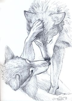 This is the sketch of the day (day 3). I will be working on a painting of wolves soon, so, I thought it would be a good idea to do a sketch of them. These two are interacting in a very wolf-ish fas...