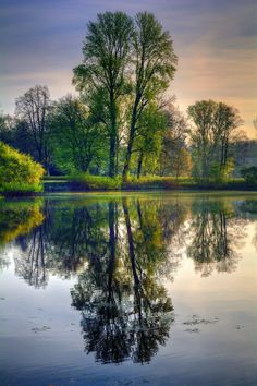 Springtime trees reflected ... by MiroS on 500px
