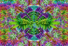 Marijuana Meerkats <3 My Love, Plants, Animals, Animales, Animaux, Animal, Plant, Animais, Planets