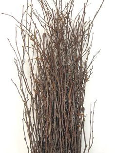 """For Centerpieces to attach Orchids to...    Birch Branches (Natural) 36-48"""" tall -  Bundle of 25   $12.99"""