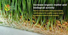 #Humicacid-A wonder for #soil! Humic Acid, Organic Matter, Herbs, Herb, Medicinal Plants