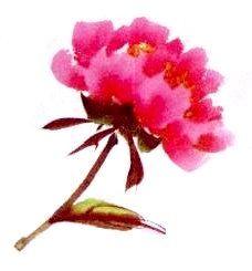 Le pivoine en peinture chinoise xieyi, la fleur vue de côté
