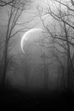 Winter Moon, trees, magical scenery, beauty of Nature, mysterious mist, misty, fog, foggy, beautiful, peaceful, photo
