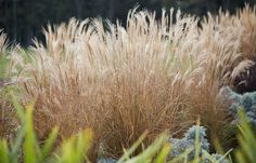 Residential and Public Landscape Design and Landscape Architecture. Landscape Structure, Landscape Architecture, Landscape Design, Herbs, Garden, Plants, Garten, Gardening, Herb