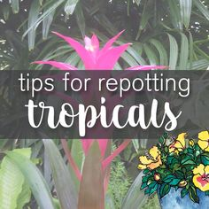 tips for repotting tropical and indoor plants