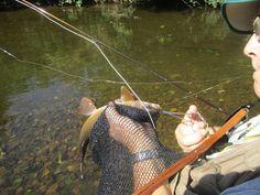 vliegvissen in Tsjechie,rust en ruimte voor weinig geld. Camping /pension Sonov.