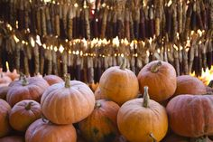 Pumpkins at Burt's Farm in Dawsonville