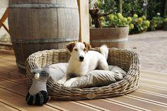 Ons nieuwe fotomodel in de kubu hondenmand uit de nieuwe Designed by Lotte collectie! www.designedbylotte.nl