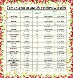 Таблица дат высева и посадки цветов.
