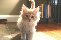 Some of the most unique kitten names include human names, celebrity names, nature names, mythology and culture names. There are so many cute kitten names on these lists!
