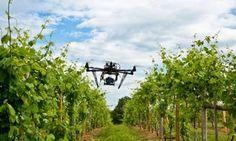 FOGLIE: Droni: rivoluzione per la viticoltura (e non solo)...