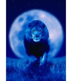 Leo Full Moon 31/01/18