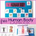 Teaching Science, Science For Kids, Science Activities, Human Body Unit, Human Body Systems, Human Body Lesson, Lapbook Templates, Printables Organizational, Free Homeschool Curriculum
