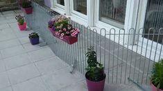 Anbei ein kleines Video als Beweis, dass der Zaun sowohl als Trennung, für die Hunde, aber auch als wunderbares Gestaltungsmittel verwendet werden kann! Wir, die Hund und ich, sind total zufrieden und können Melabel nur weiterempfehlen! Rabbit, Outdoor Structures, Breaking Up, Small Animals, Fence, Pet Dogs, Floral, Bunny, Rabbits