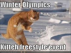 Lolcat Winter Olympics Events: Freestyle